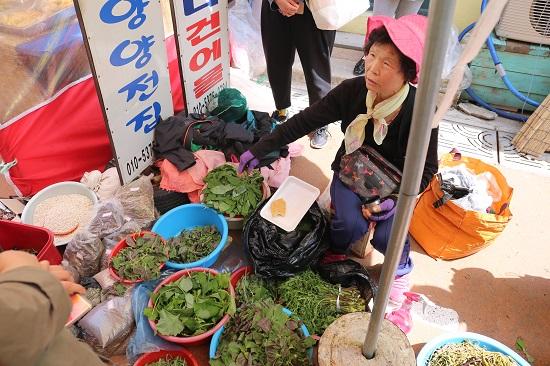 이금난(75?양양읍 수산리) 씨가 자신이 채취해온 나물취, 곤드레, 두릅, 우산나물 등을 설명하고 있다.