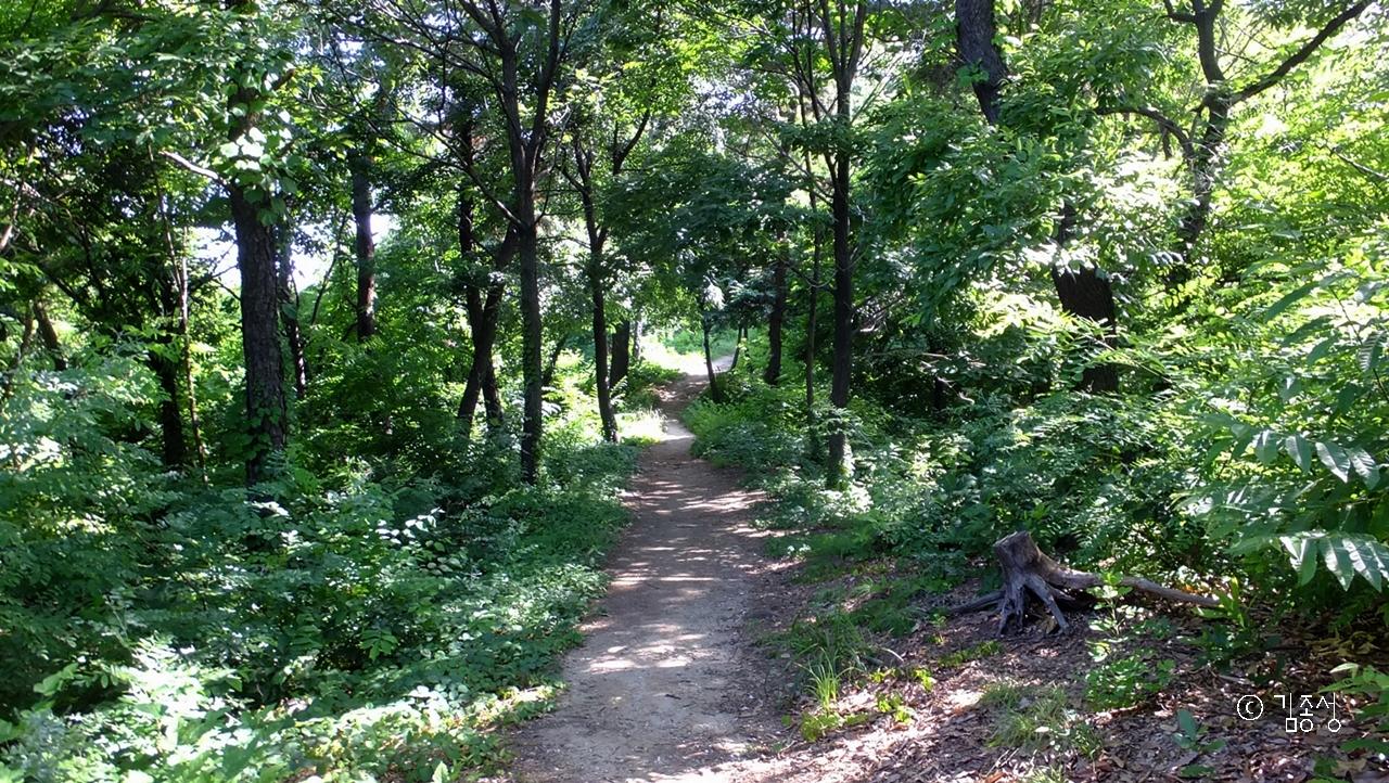 울창한 숲속 오솔길.