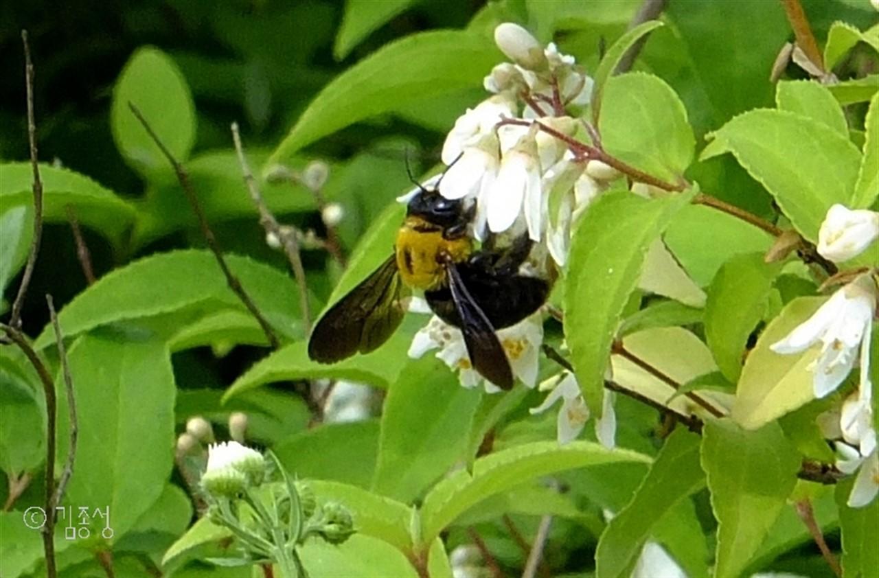 맛나게 꿀을 먹는 곤충들.