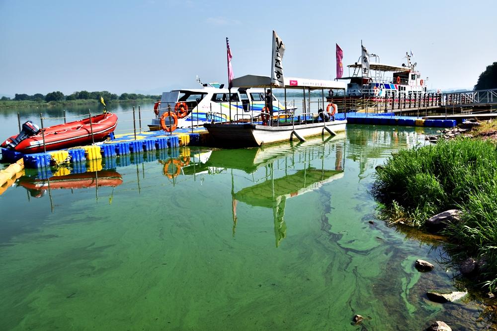 녹조라떼의 낙동강에서 달성군의 뱃놀이 사업은 강행되고 있다.