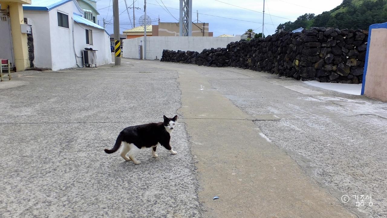동네 주민처럼 산책하는 섬 마을 고양이.