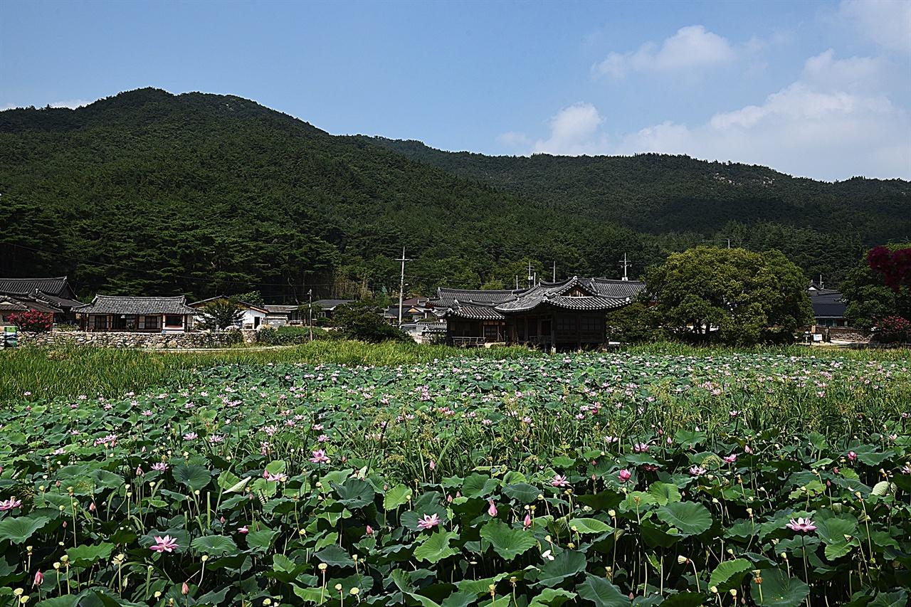서출지  남산 동쪽 기슭에 차분하게 들어앉아 있는 작은 연못이지만, 1500년 이상의 역사와 스토리를 지닌 연못이다.