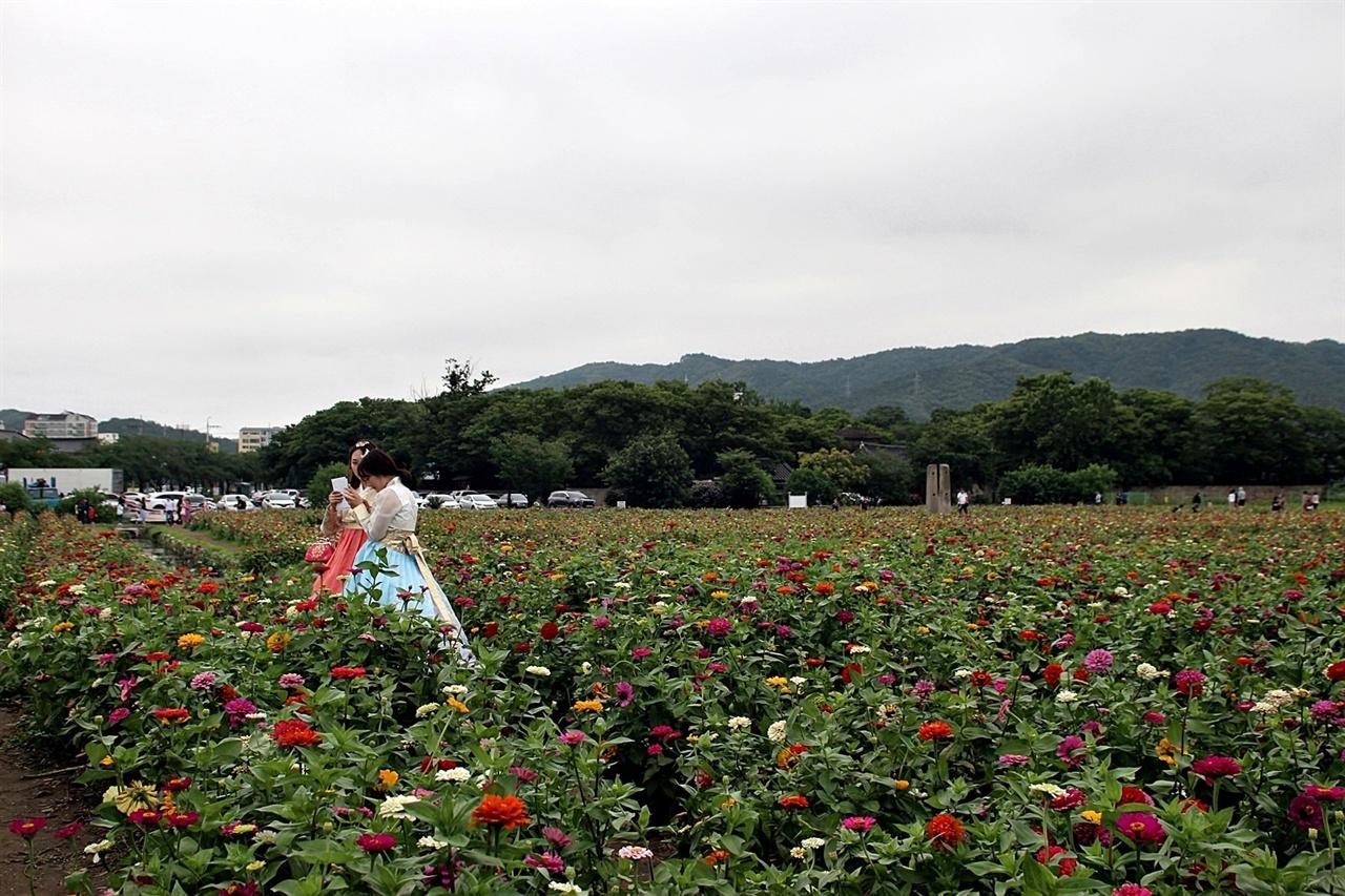 황룡사지 꽃백일홍단지에 고운 한복을 입은 젊은 관광객들의 모습
