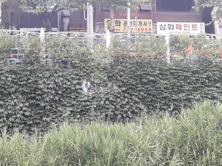 성북천의 또 다른 조형물