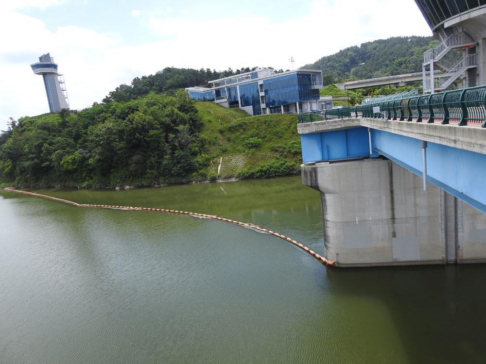 20cm 수위를 낮춘 백제보 갇힌 강물이 녹색으로 물들고 있다.