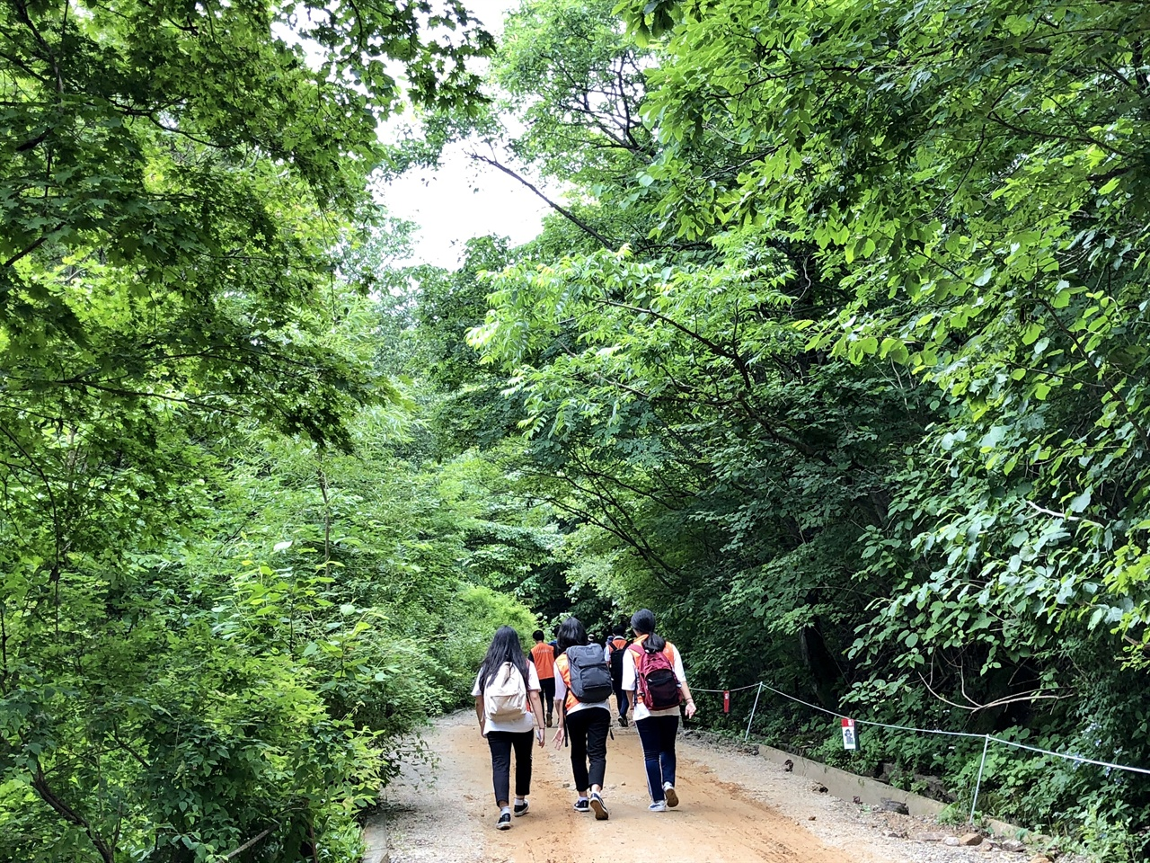 노고단 탐방로 탐방객들이 초록의 노고단 탐방로를 걷고 있다.