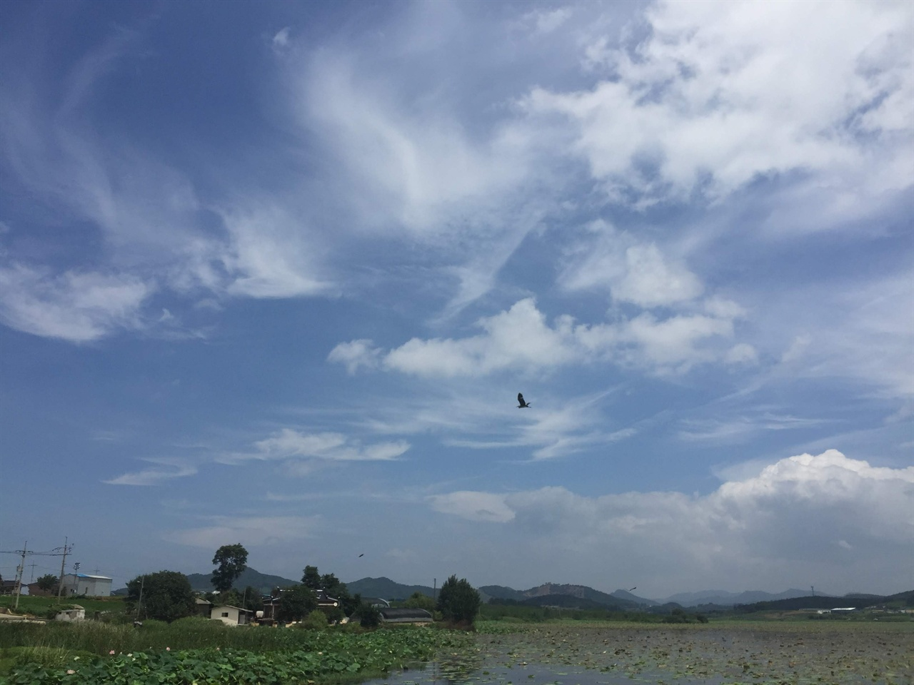 여름이 그린 하늘 그림