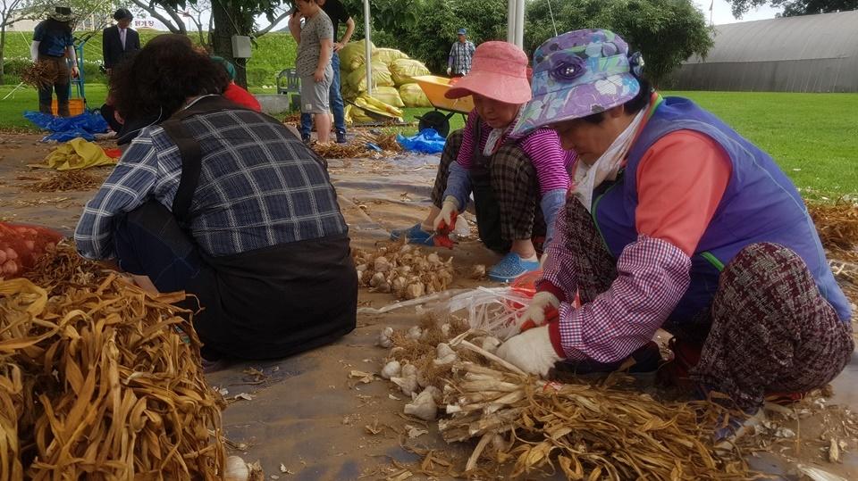 '서산6쪽마늘축제'을 찾은 많은 관광객이 직접 마늘을 보면서 구매를 하기도 했다. 아울러 현장에서는 구매한 마늘을 바로 택배를 이용해 배송서비스까지 하고 있다.