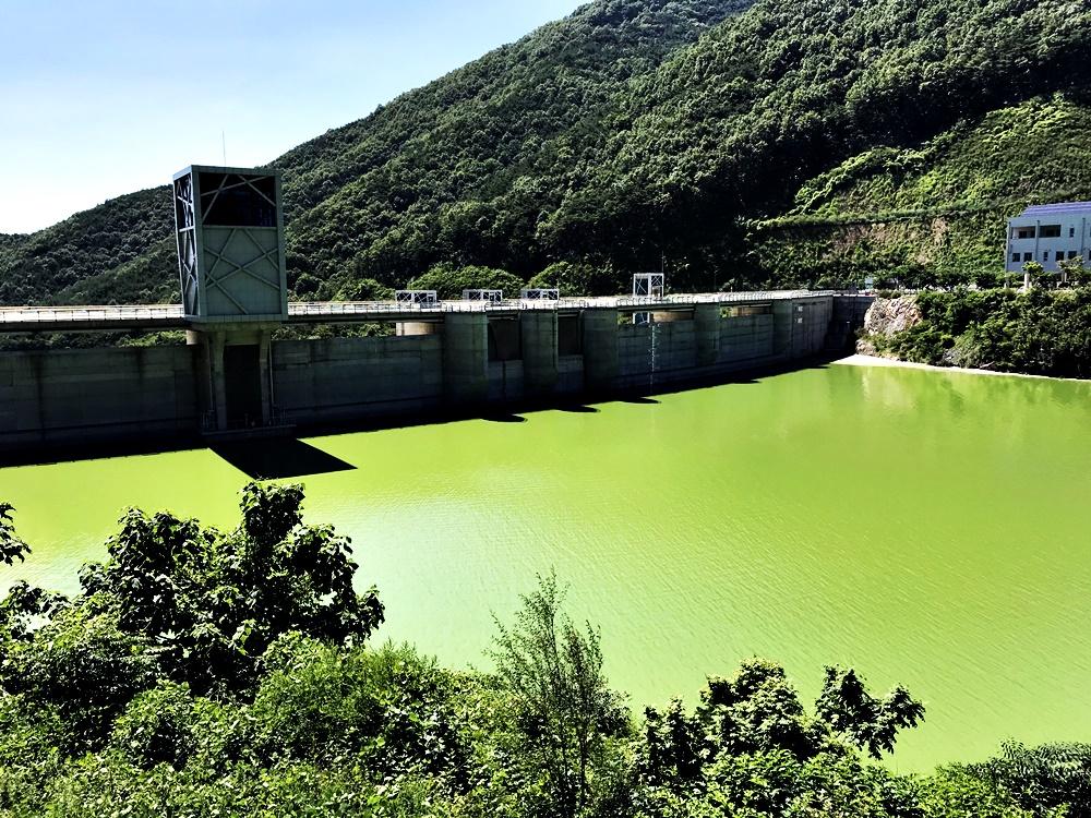 독성조류가 창궐하는 녹조라떼 배양소가 보현산댐의 7월 14일 오후의 모습. 4대강사업의 하나로 건설된 보현산댐은 영주댐에 이어 녹조 문제로 사실상 그 기능을 하지 못할 것으로 보인다.
