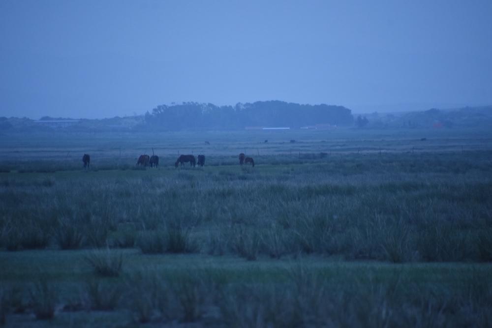 대평원이 펼쳐진 내몽고 초원에서 가축들이 평화로이 풀을 뜯고 있다