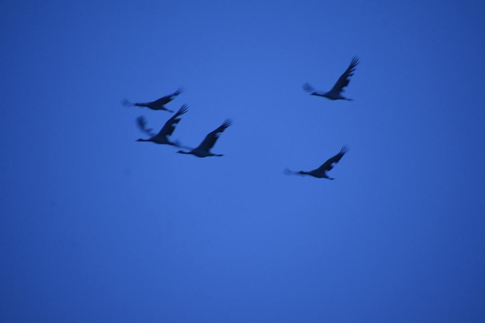 쇠재두리미 가족이 유유히 하늘을 날고 있다