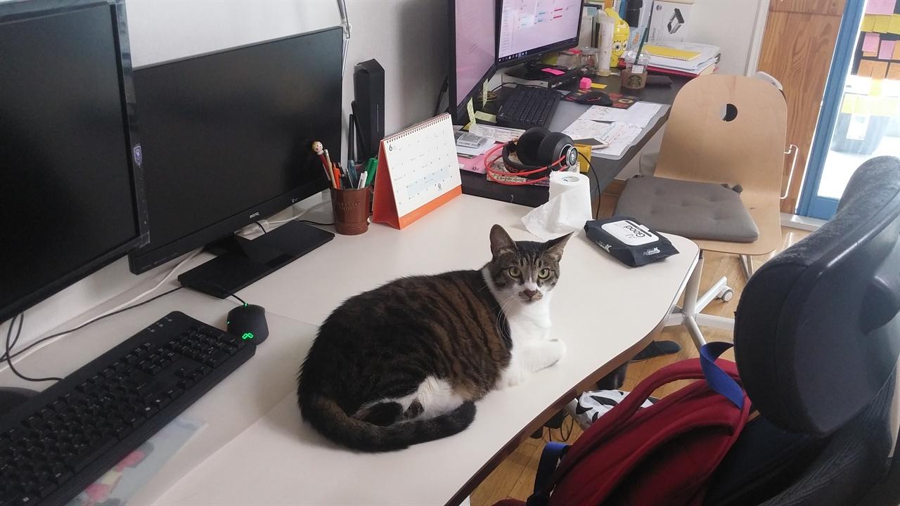 연분홍치마 사무실 고양이 연분홍치마 사무실에는 고양이 3마리도 함께 지내고 있다.
