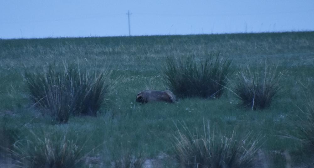 어느새 나타난 너구리 한 마리가 손살같이 내달린다. 이렇게 빨리 뛰는 너구리는 처음 봤다