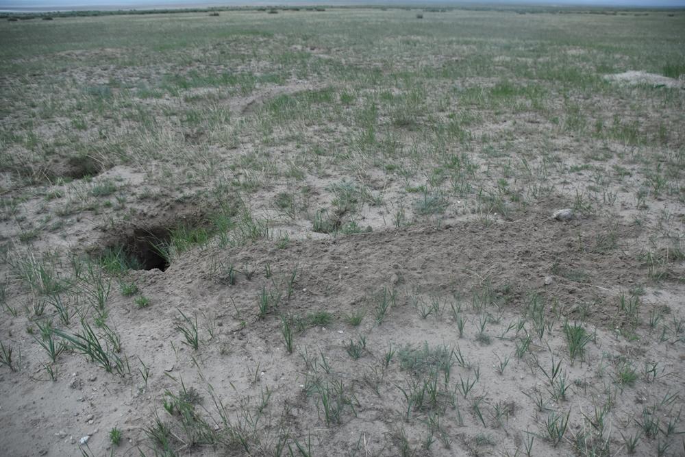 여우굴의 모습. 여기저기 굴로 들어가는 구멍이 뚫려 있다.