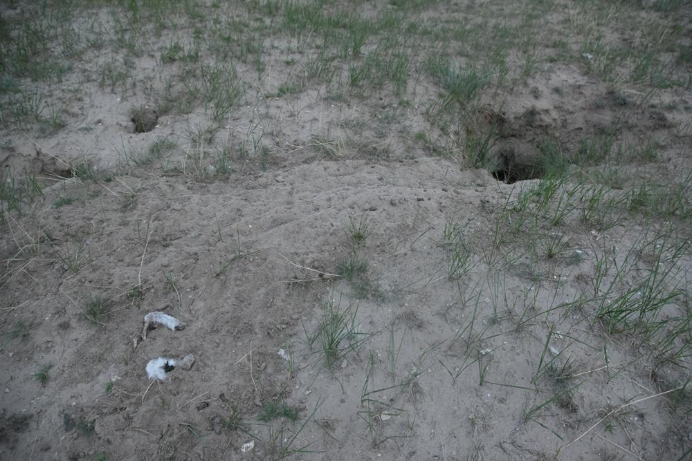 여우굴 앞에 지난밤 사냥하고 먹다남은 것인지, 어린양의 발목만 덩그러니 놓여 있다