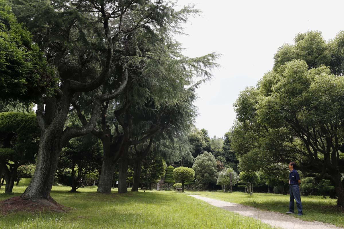 이국적인 풍경의 나무들이 즐비한 소록도 중앙공원. 한센인들이 강제 동원돼 조성한 공원이다.