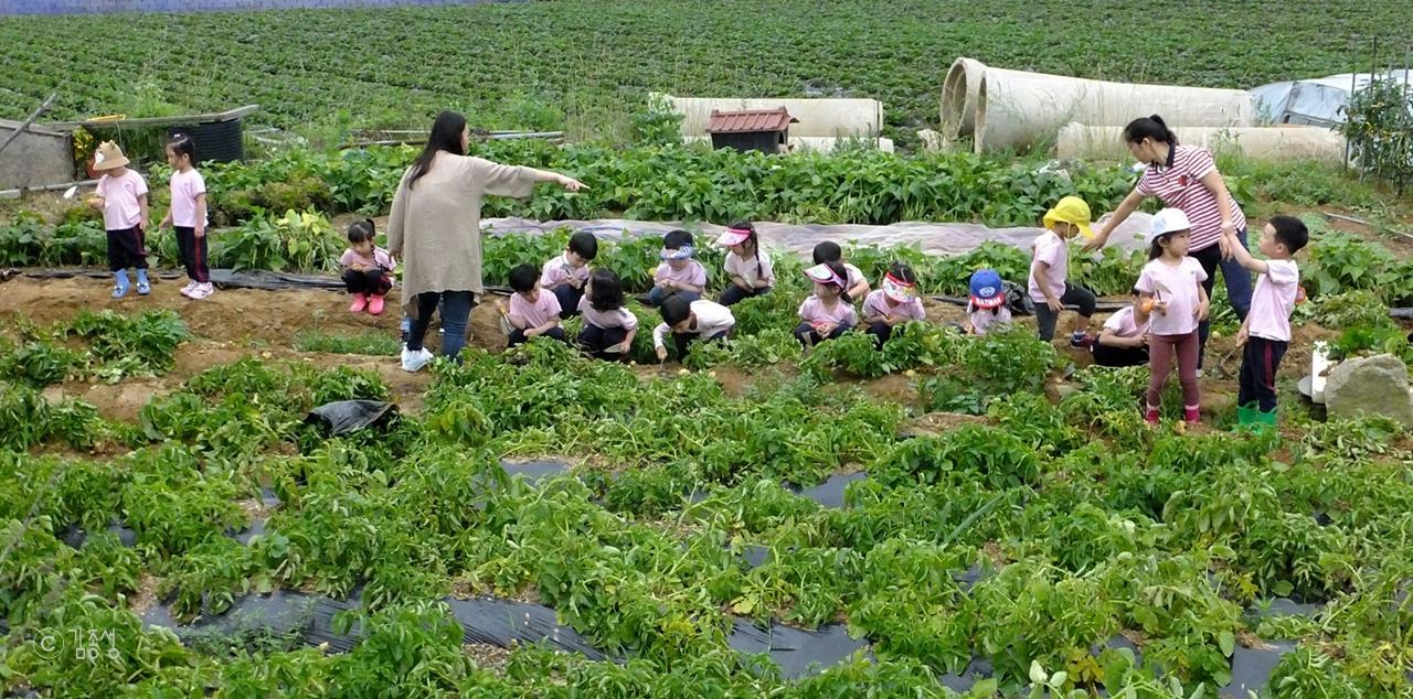 섬 마을에서 체험학습 하는 아이들.