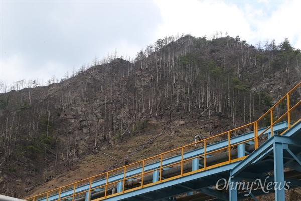 영풍석포제련소 공장 인근의 야산에 있는 나무들이 고사된 상태로 방치돼 있다.