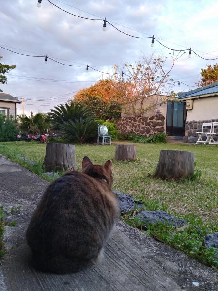 두 발 고양이 강호, 여행을 떠나다