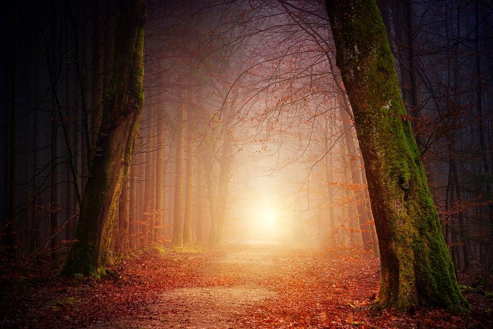 소설은 마법의 숲에서 벌어지는 안톤 씨의 모험을 다룬다