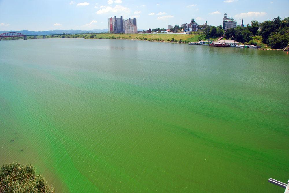 충남 부여군 백제대교에서 바라본 규암나루터 또한 온통 녹색이다.
