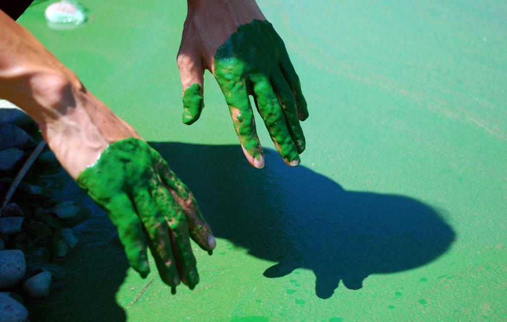 이경호 차장이 강물에 손을 담갔다가 빼자 손에 녹조가 거머리처럼 덕지덕지 달라붙었다.