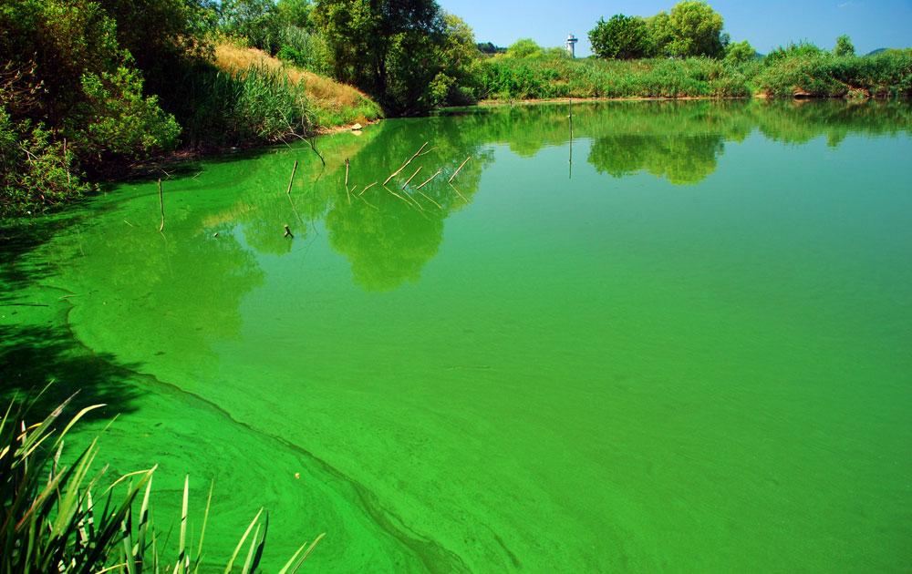 백제보 상류 한국수자원공사 선착장이 녹조가 발생하면서 녹색으로 물들었다.