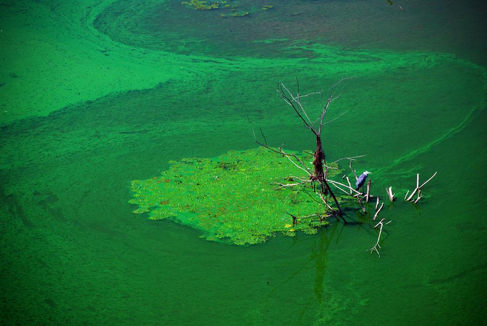 충남 부여군과 청양군을 연결하는 왕진교 다리 밑에 왜가리 한 마리가 물고기를 잡기 위해 말라죽은 나뭇가지에 앉아있다.