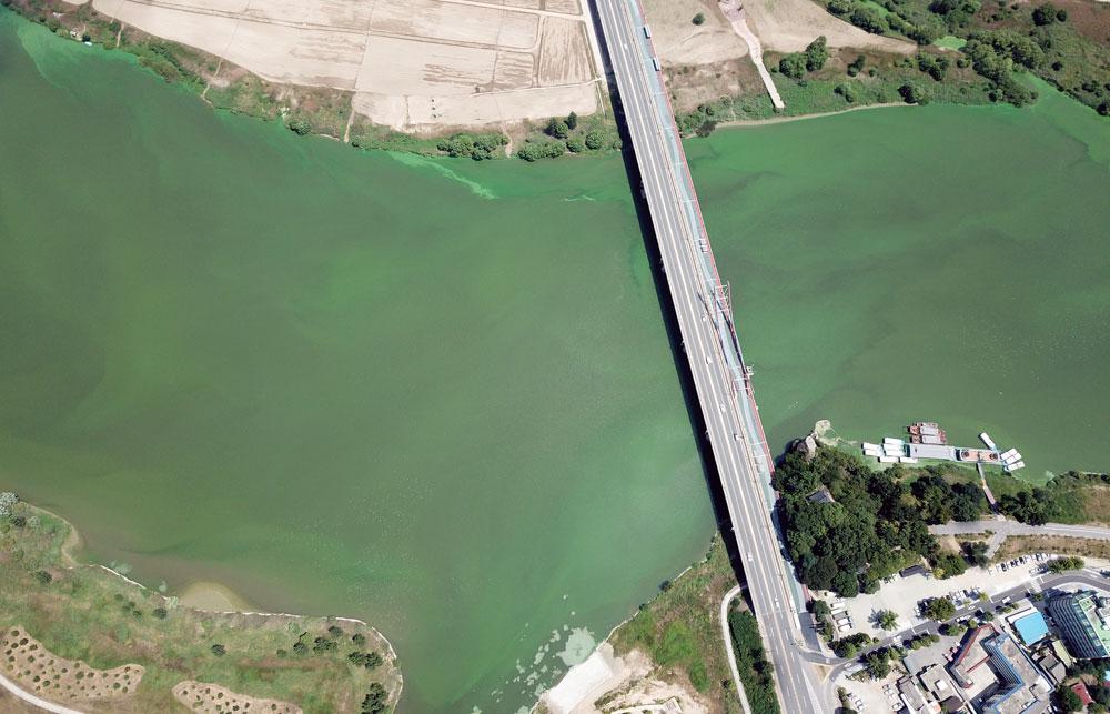 충남 부여군 백제대교 인근이 녹조로 물들었다. 이곳은 충남 서북부 7개 시·군 도민들의 식수를 보령댐으로 공급하는 곳이다.