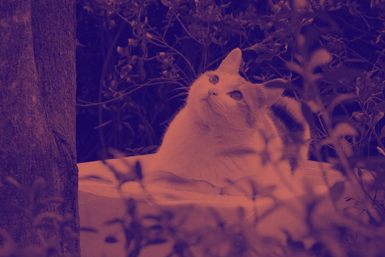 인간과 고양이가 공존하는 캠퍼스, 비결은 무엇일까?