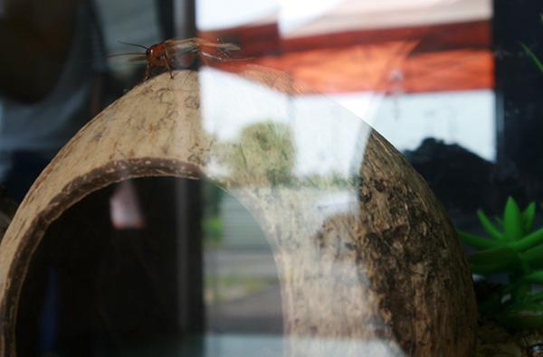 '쌍별귀뚜라미'가 입구에서 방문객들을 환영하고 있었다.