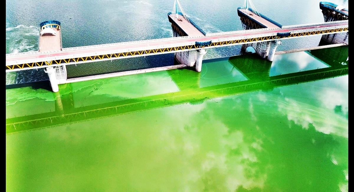 녹조로 뒤덮인 낙동강 달성보의 모습. 녹색강의 모습이다.