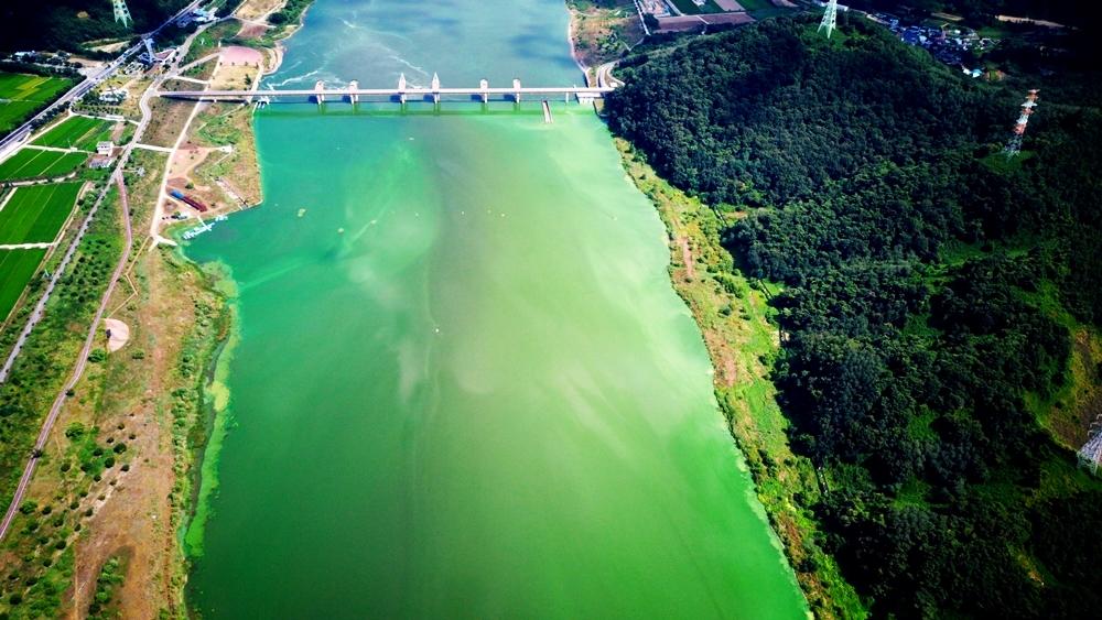 강전체가 녹색이다. 녹색강 낙동강. 낙동강은 1300만 영남인의 식수원이다.
