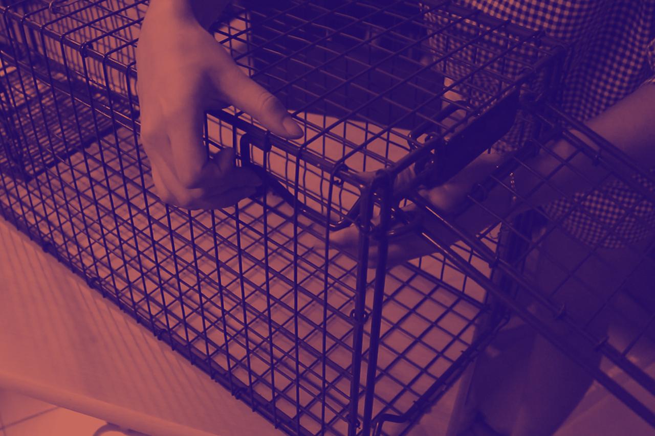 포획틀은 길고양이 건강관리 및 중성화시술을 위한 필수품이다.