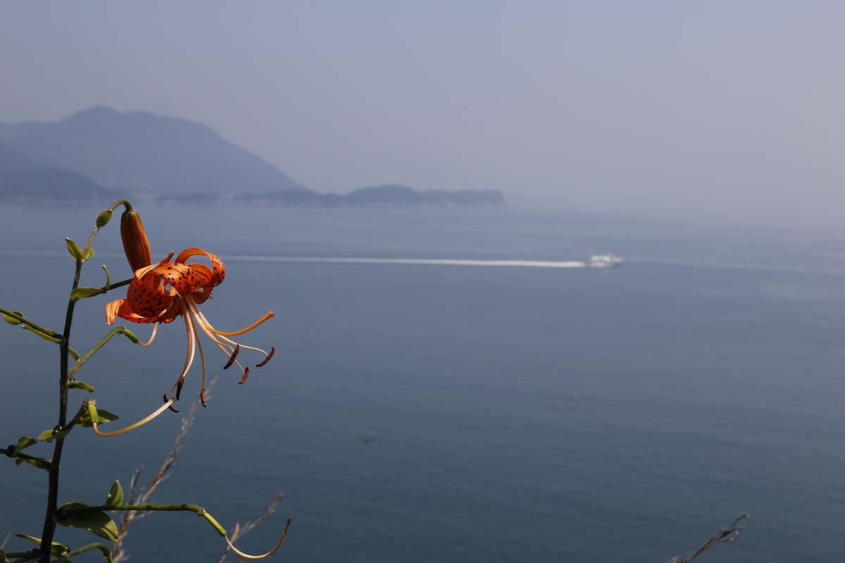 하화도 해안 절벽에 핀 나리꽃. 그 너머로 배 한 척이 지나고 있다.