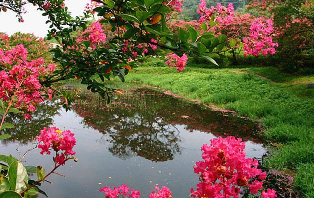 연못에 풍덩 빠져 일렁이는 꽃물결.