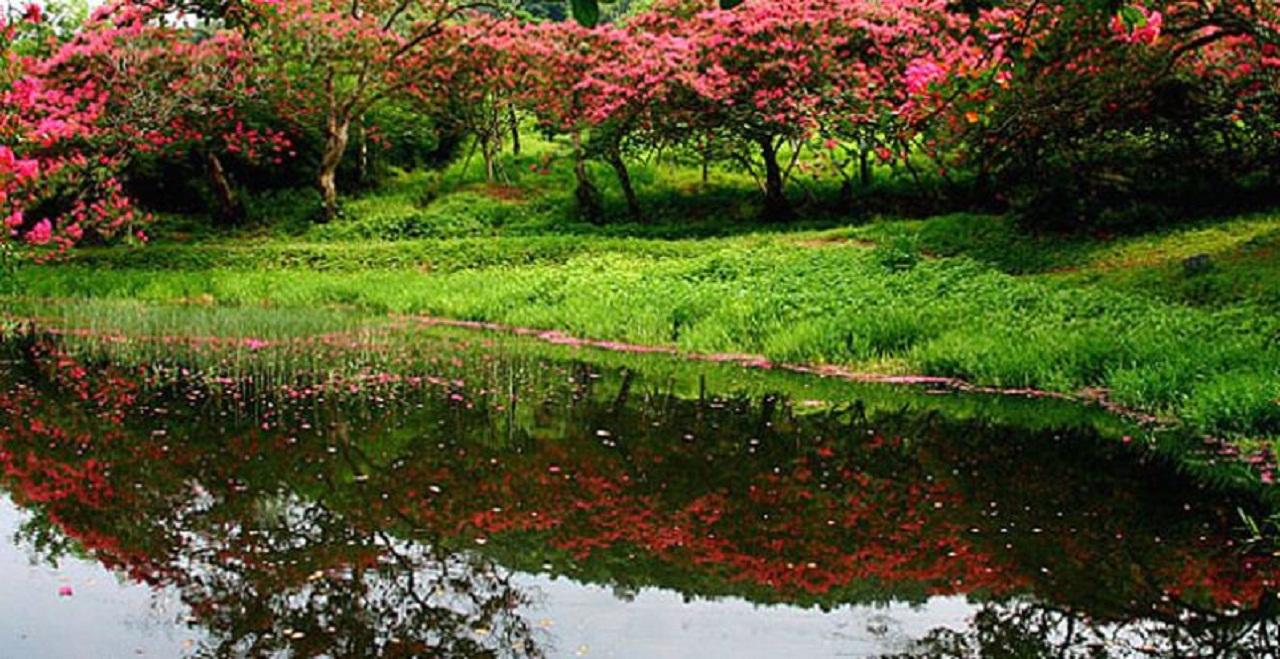 연못을 중심으로 양쪽 둑방길에 고목이 된 배롱나무가 꽃무리를 가득 달고 꽃술을 흔들고 있다.