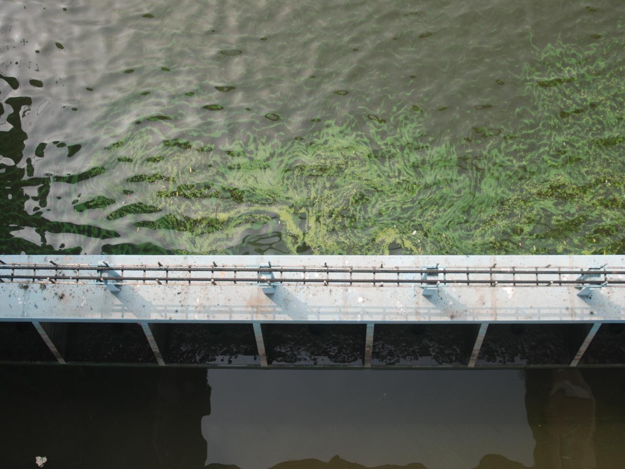 신곡수중보 가동보 위에서 본 모습 2015년 7월 14일 한강에 녹조가 창궐할 때, 신곡수중보 가동보 위에서 찍은 녹조 사진이다. 신곡보 하류엔 녹조가 없다.