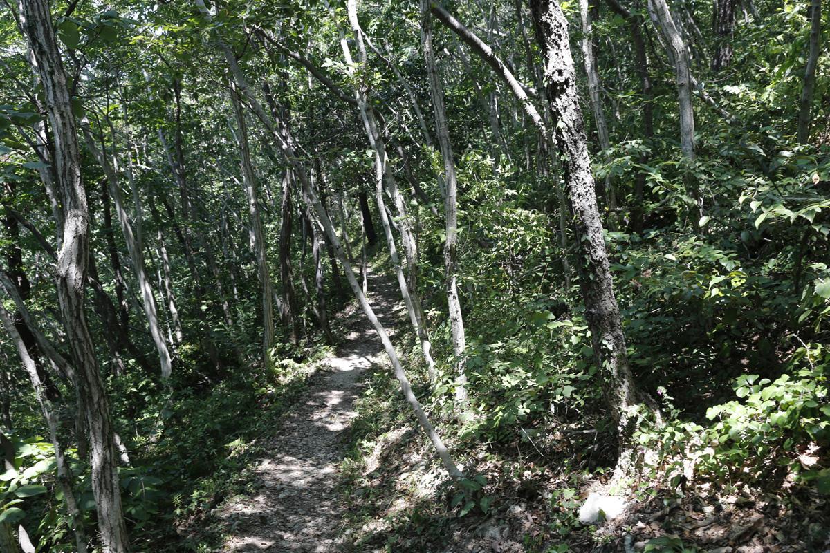 남도한바퀴를 타고 가서 만난 접도 남망산의 웰빙 숲길. 난대수가 빽빽한 숲길은 한낮에도 그늘이 드리워진다. 내려쬐는 햇볕을 피해 숲길을 걸을 수 있다.