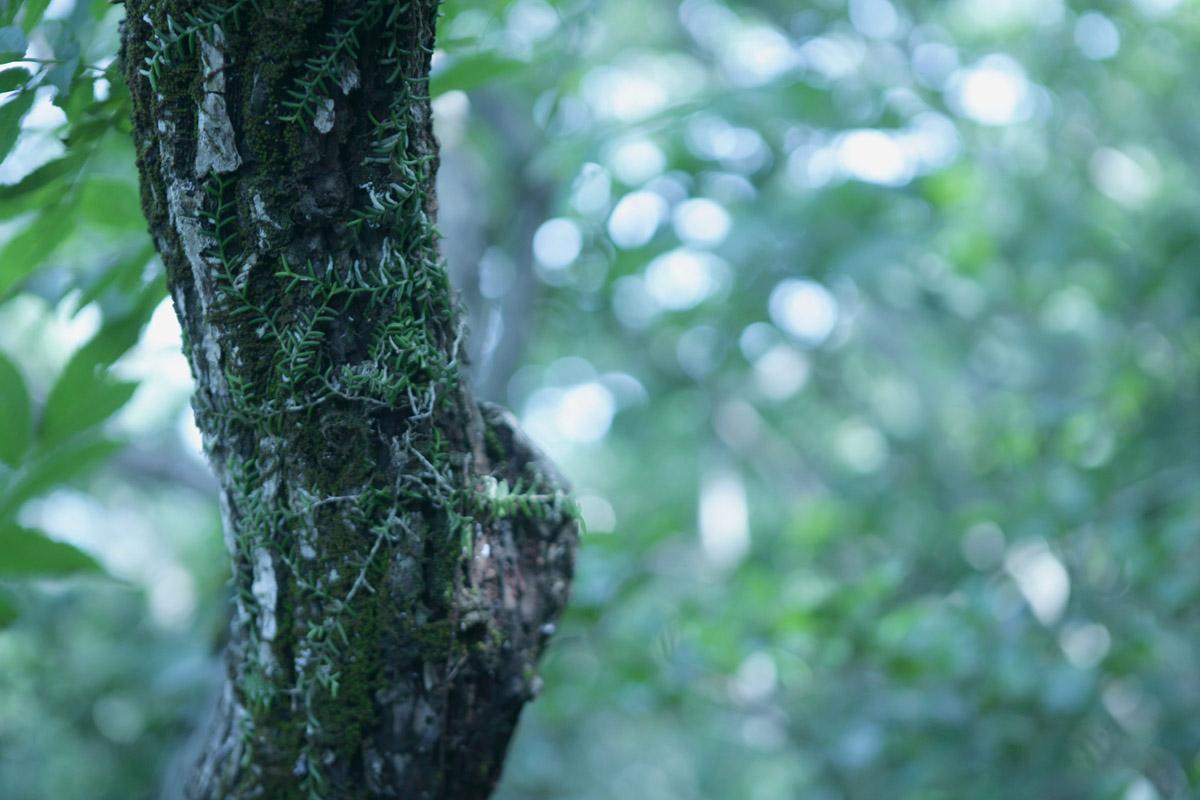 접도 남망산에서 만난 지네발란. 난의 생김새가 지네의 발을 닮았다. 남망산에는 뭍에서 보기 드문 나무와 식물이 많이 자생하고 있다.