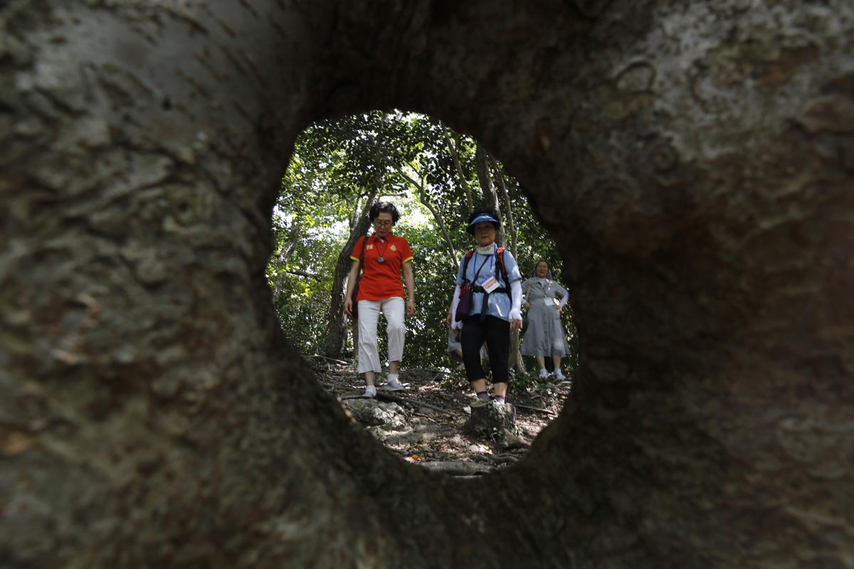 접도 남망산 사랑의 숲의 연리지 느티나무. 가운데에 큰 구멍이 뚫려 있어 '여성 느티나무'로 불린다.