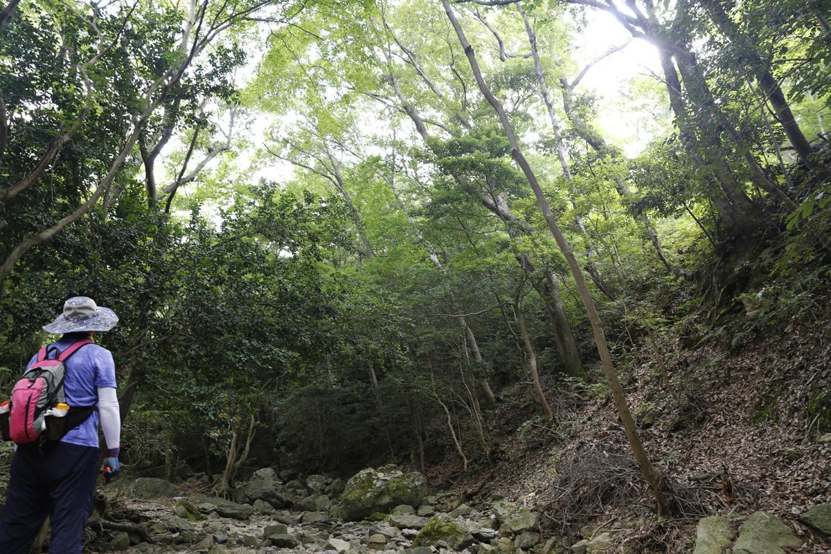 쌍계사 상록수림. 지난 5일 남도한바퀴를 타고 진도를 찾은 여행객이 숲을 바라보며 깊은 숨을 내쉬고 있다.