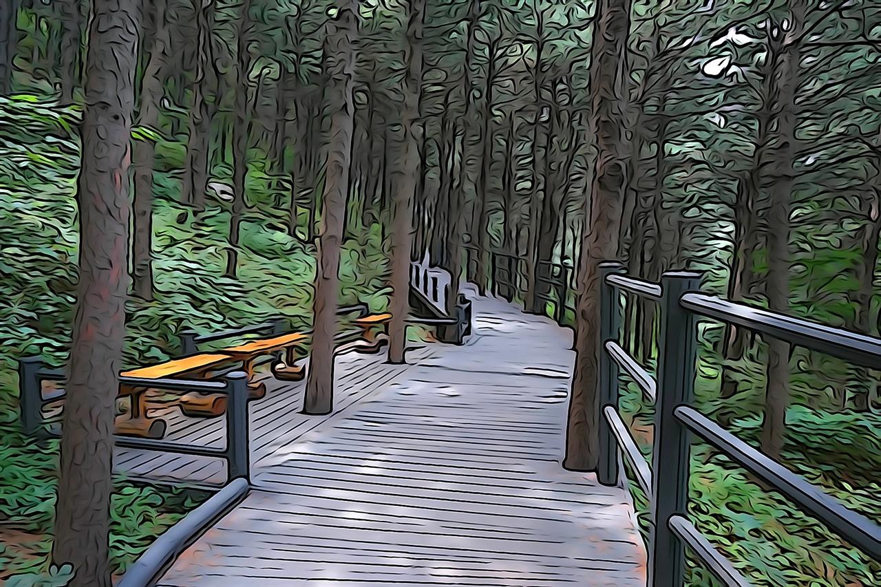 숲속 쉼터