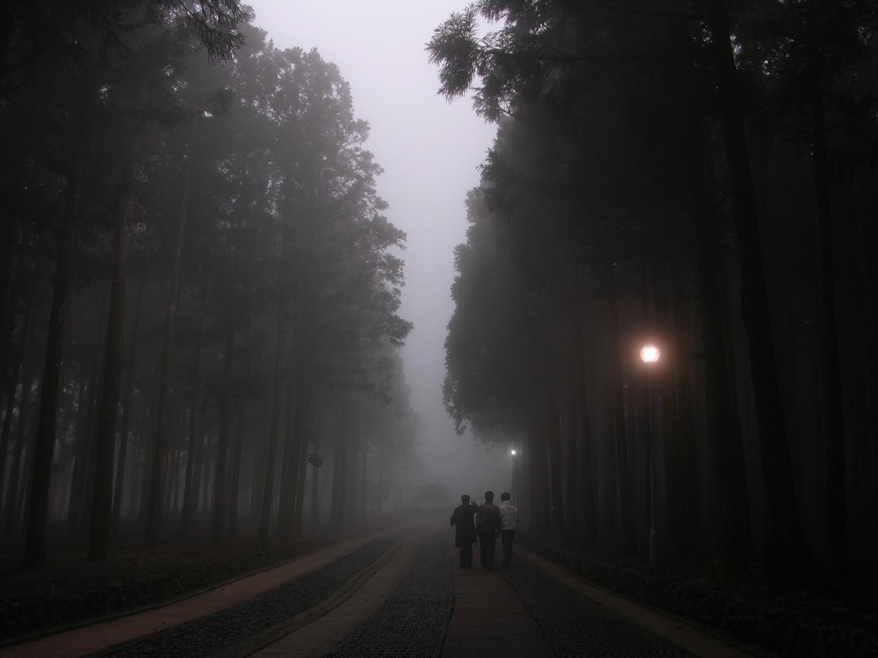 절물휴양림 절물휴양림 삼나무 산책길로 참으로 아름 다운 길 중의 하나다. 그 길을 걸으면 피톤치드 향이 온 몸을 감싸곤 했다.