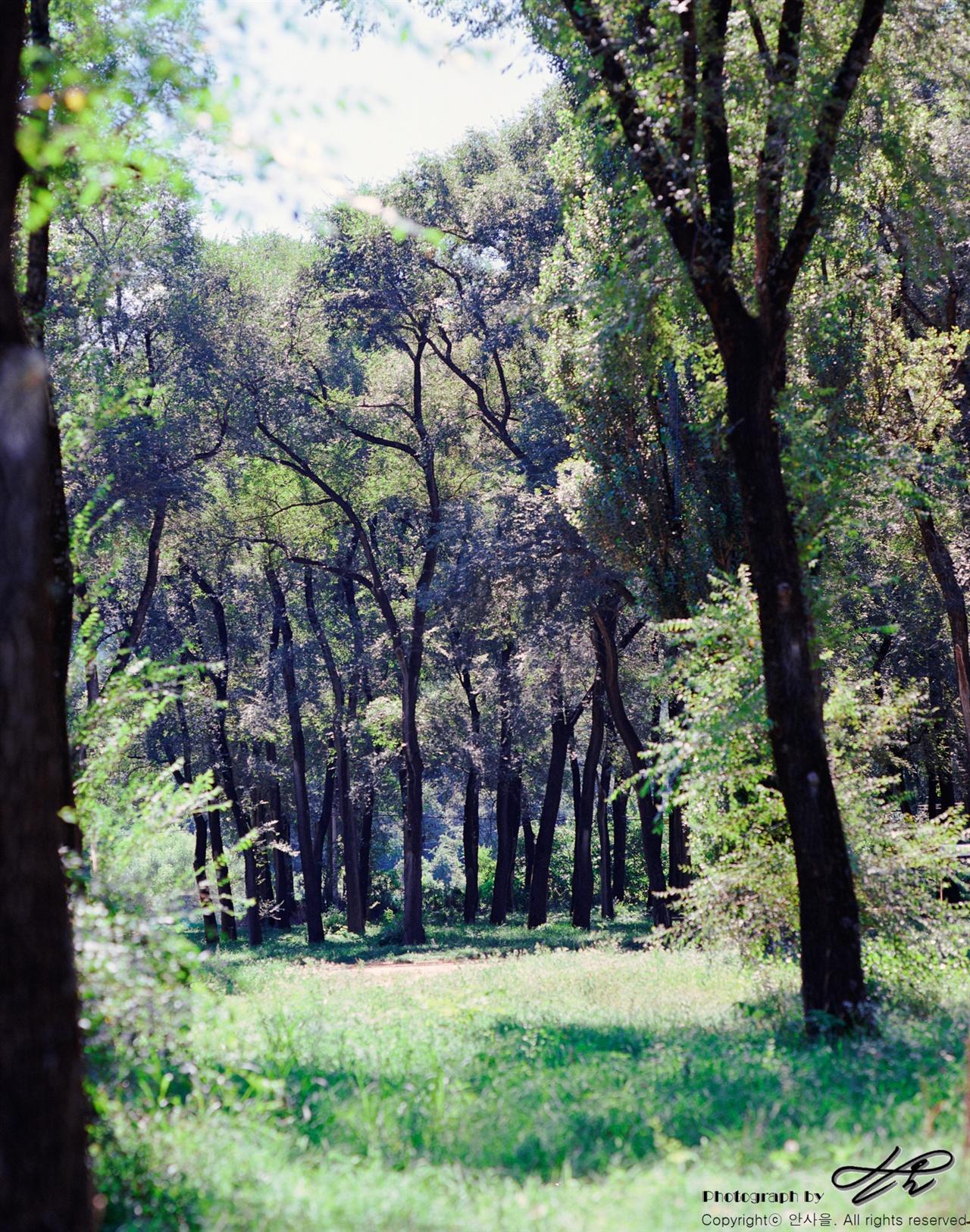 미락숲 (Pro400H)강한 역광을 받아 이파리는 연둣빛으로 빛났고 나무의 몸통은 실루엣으로 남았다.