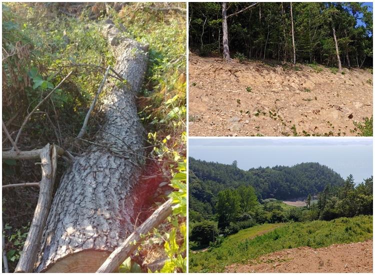 태양광 발전소 개발 행위 허가로 잘리고 파인 화양면 이목리 서연마을 산의 모습