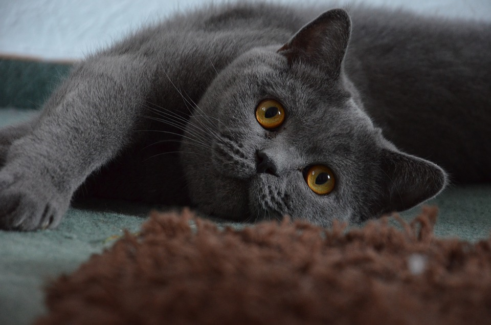숲의 여왕인 변덕 신의 겉모습은 암회색 고양이다.