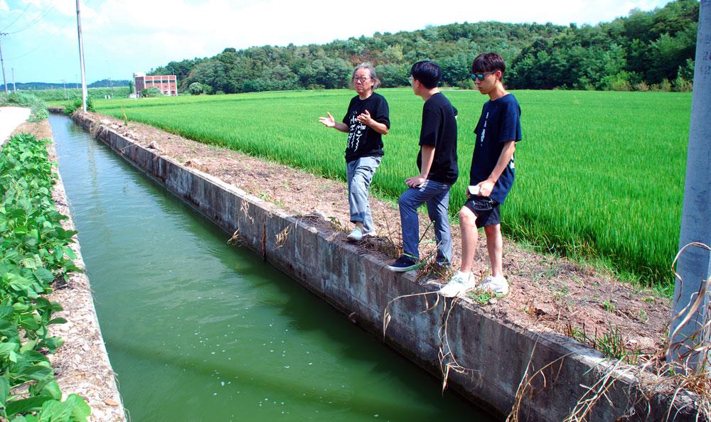 충남 부여군 세도면 농수로를 타고 공급되는 강물이 녹조로 가득하다.