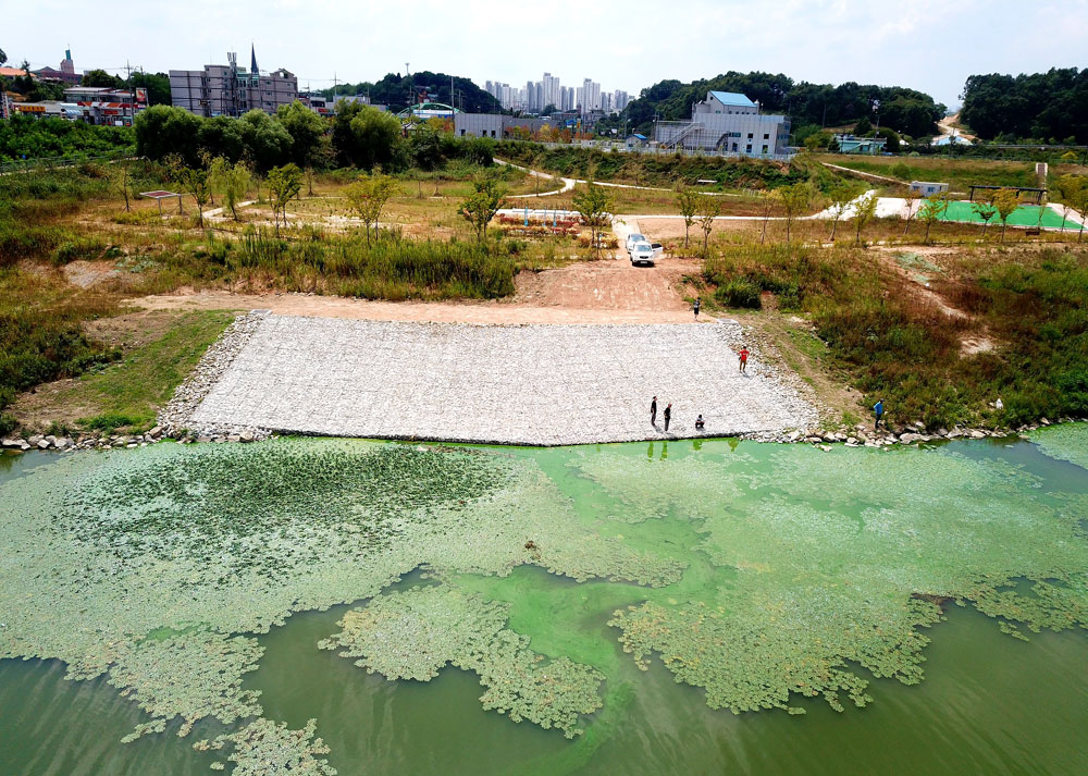충남 부여군에서 보령댐으로 공급하는 도수로 주변이 온통 녹조로 찌들었다.