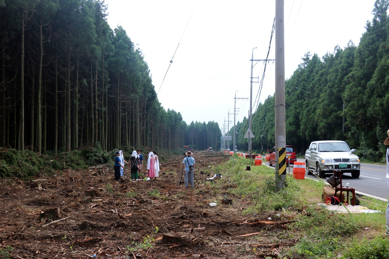 도로 확포장으로 삼나무가 훼손된 비자림로